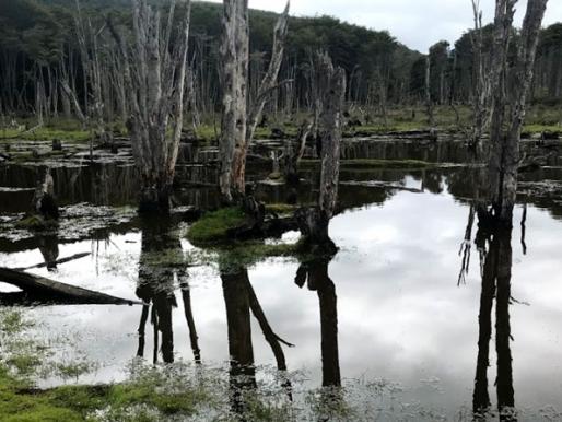 SACO y Casa-Museo Alberto Baeriswyl (CAB) de Magallanes planifican programa de vinculación artística entre zonas extremas